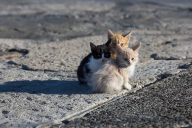Kittens, cat thrown out of moving car during festive season in Free State